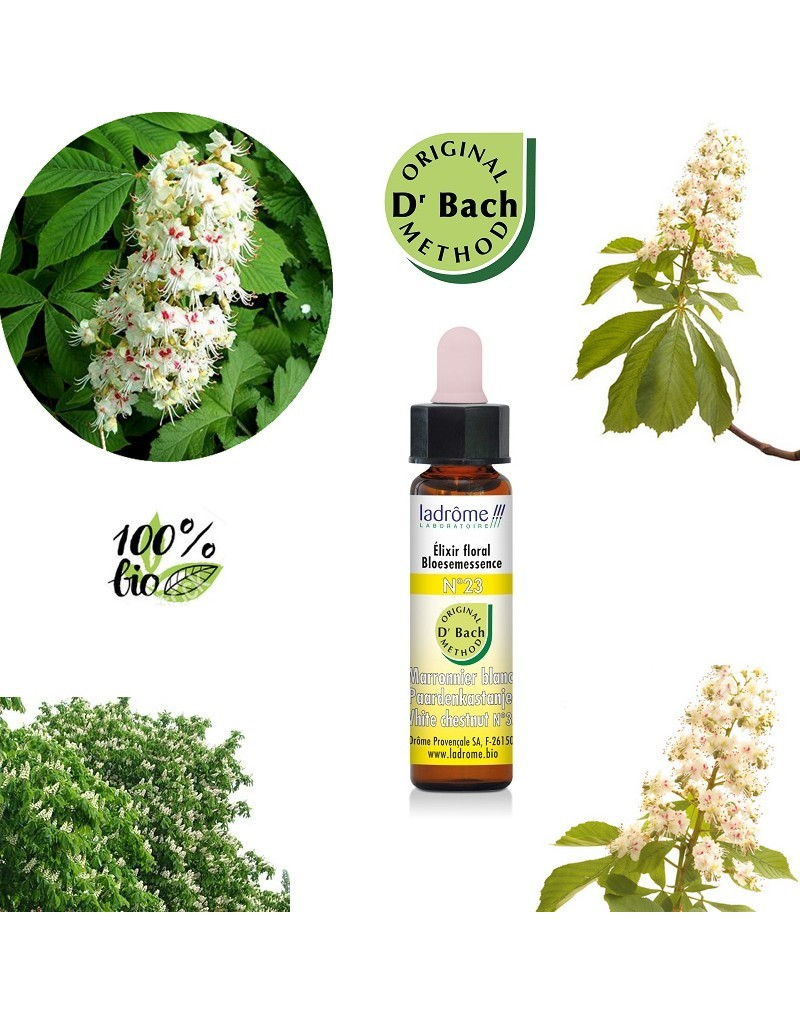 Bach Flowers White Chestnut Elixir Organic Floral N 23 Boutique