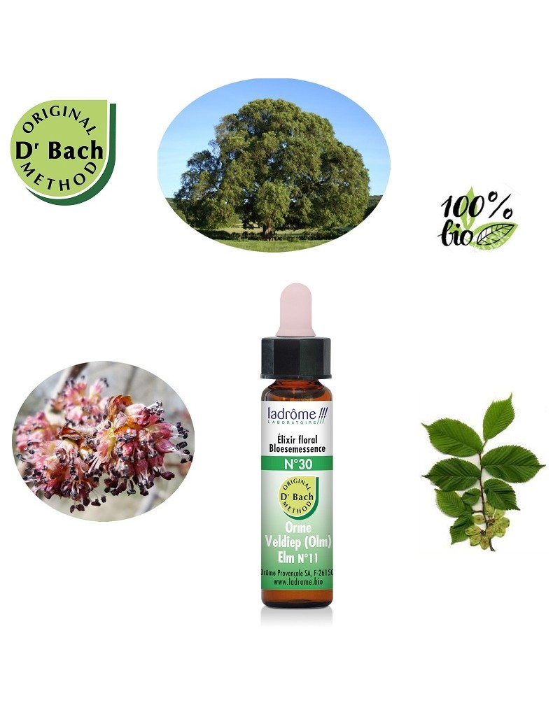 Bach Flower Organic Floral Elixir N 30 Elm Boutique Kementari